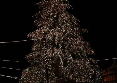 Riesenchristbaum_Galerie_0008